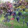 I folletti del vin Raboso