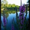 La splendida natura lungo la Piave Vecchia. Foto di Luisa Scabbio