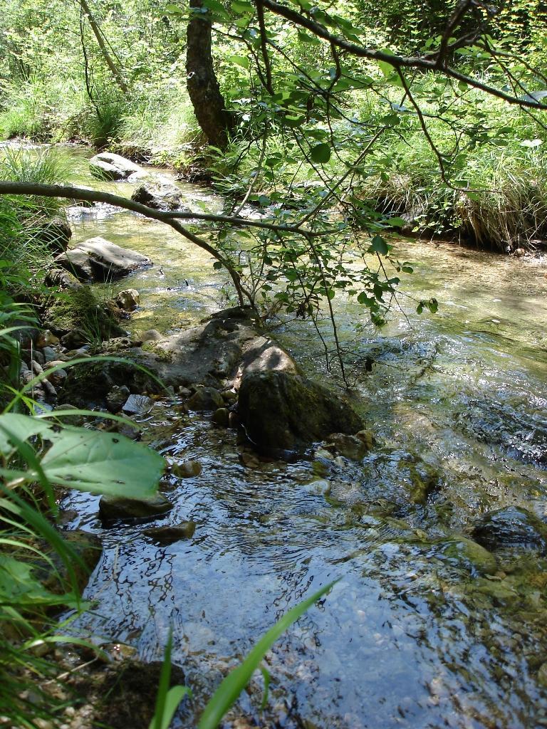 Nel bosco a Cison