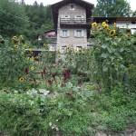 Un originale giardino
