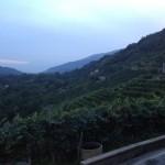 Le verdi colline