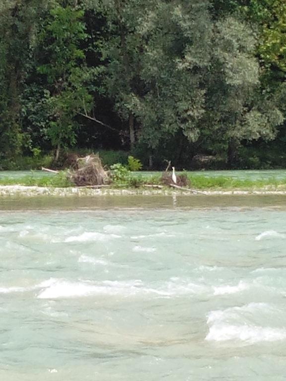 Il Piave a Nervesa della Battaglia (TV), vicino alla centrale dell'acqua. Foto di Lorenza Lunardi