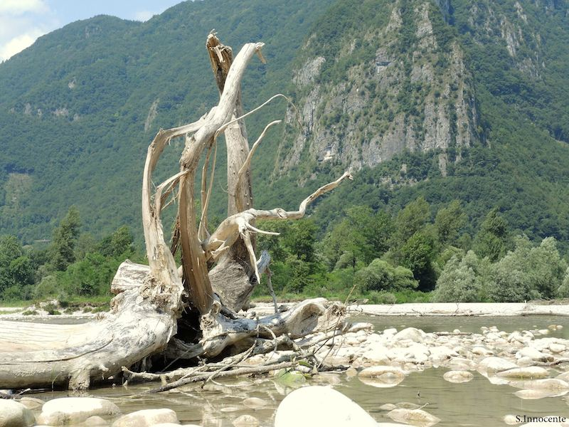 Il fiume Piave a Caorera (Belluno). Foto di Sergio Innocente