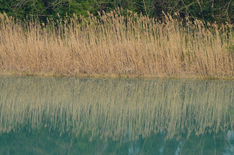 Canneto lungo l'argine del Piave a Cortellazzo (VE). Foto di Santina Pompeo